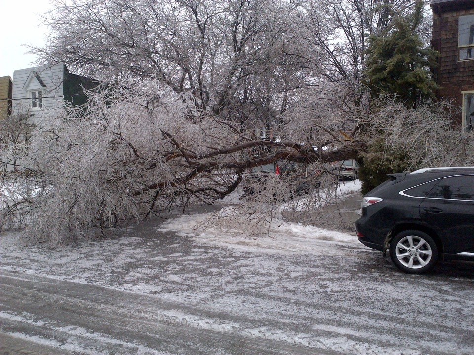 A toppled tree lies in Toronto's Leslieville neighbourhood on Dec. 22, 2013. (Peter Camp / CTV News)