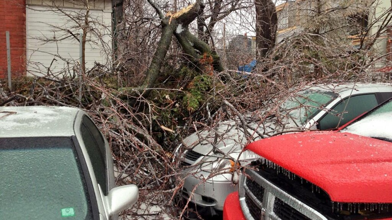 Ice-covered tree branches lie on top of cars in Toronto on Dec. 22, 2013. (John Vennavally Rao / CTV News)