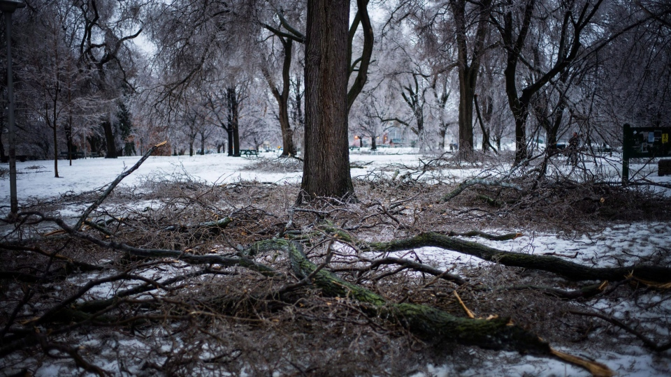 Downed tree limbs litter Dufferin Grove Park following an ice storm in Toronto on Sunday, Dec. 22, 2013. (Ian Willms / THE CANADIAN PRESS)