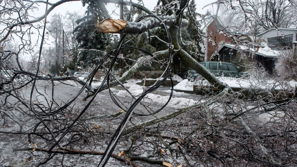 A power line lies tangled in a broken tree branch on a residential street in Toronto as over 250,00 people face up to 72 hours without electricity after a storm brought freezing rain on Sunday, Dec. 22, 2013. (Chris Young / THE CANADIAN PRESS)