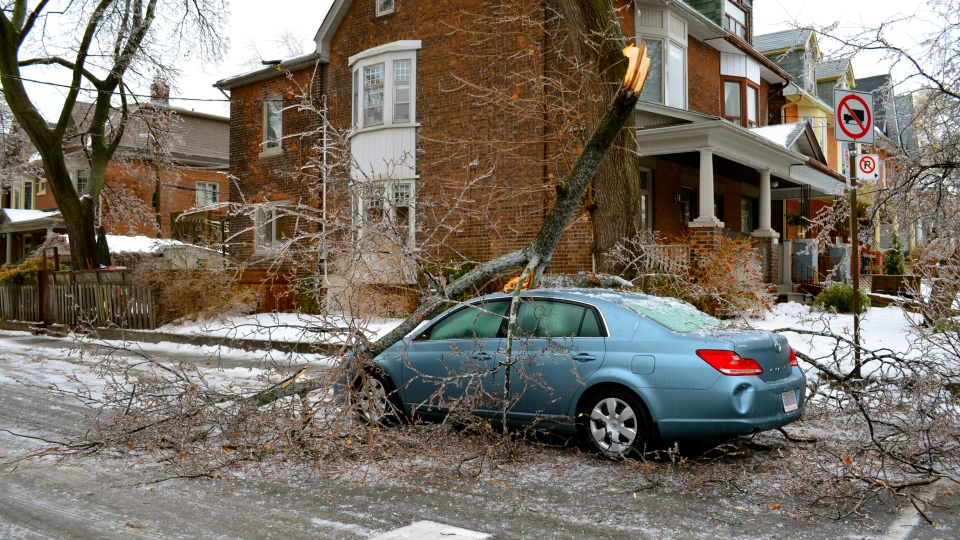 An ice-covered branch falls on top of a car in Toronto, Sunday, Dec. 22, 2013. (Anita Barber / MyNews)