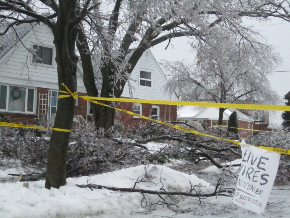 Ice-covered branches bring down hydro wires in Toronto, Monday, Dec. 23, 2013. (Danielle Sneyd / MyNews)