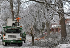 Crews clear branches in Brampton