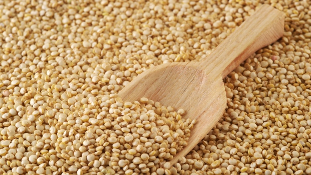 Quinoa seeds found at Ontario construction site date back to 900 BC: researchers