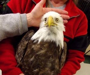 Wildlife Rehabilitation Center of Northern Utah