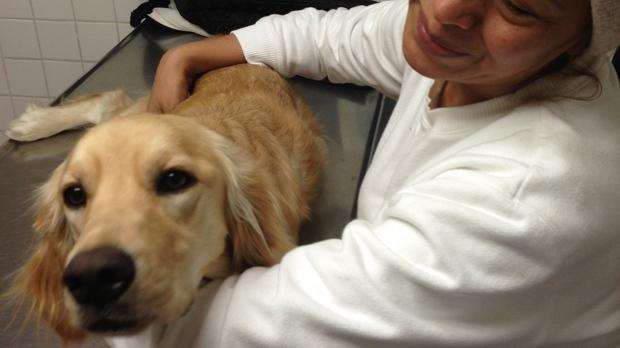 Talia the Colombian dog