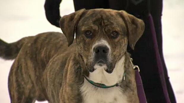 Abandoned pets, Humane society, dumped dogs, aband