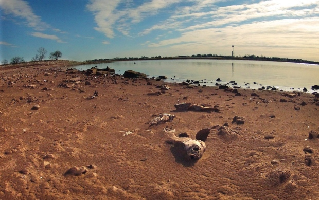 Dead fish on silt in drought-ravaged Texas