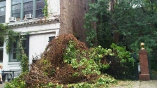Vines are ripped from a building due to Hurricane Irene in Greenwich Village, N.Y. on Sunday, Aug. 28, 2011.