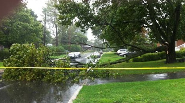 MyNews contributor Erika Sauro-Rose sent in this photo of a tree branch that fell after a storm in Poite Claire, Que., on Sunday Aug. 28, 2011.