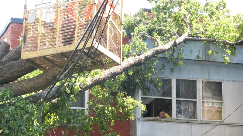 Workers remove a huge tree that came down on an apartment in central Montreal because of high winds and rain from remnants of Hurricane Irene, on Monday Aug. 29, 2011. (Peter Ray / THE CANADIAN PRESS)