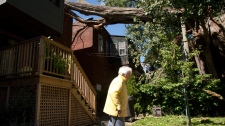 Fernande Simard, 92, looks at the damage caused to her neighbour's house after a 300-year old tree was blown down onto the house by the remnants of Hurricane Irene in Montreal, Monday, Aug. 29, 2011. (Ryan Remiorz / THE CANADIAN PRESS)