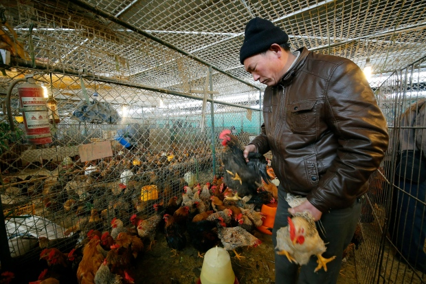 Experts monitor bird flu