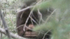 One of Todd Standing's Bigfoot pictures