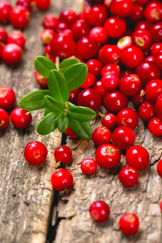 Lingonberries could lower obesity risk