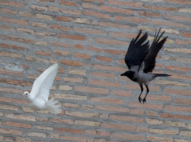 Peace dove attacked at Vatican