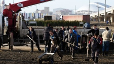 Workers plant trees at Olympic park in Sochi