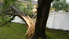 This fallen tree represented just some of the damage left behind by a minor tornado that hit Trois-Rivieres on Sunday evening.