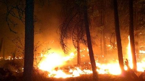A forest fire has forced the evacuation of 550 people near Kelowna, B.C. (Trevor Rockliffe/Castanet Media)