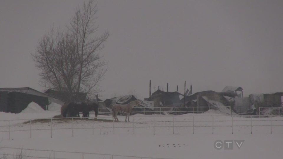 Fire destroys a barn north of Creemore on Saturday, Feb. 1/14. (Roger Klein / CTV Barrie)