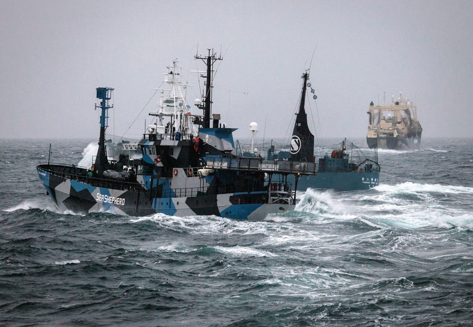 Japanese vessel Yushin Maru No. 2, centre, sails alongside Sea Shepherds' The Bob Barker, left, in the Southern Ocean off Antarctica on Feb. 2, 2014. (Sea Shepherd Australia, Eliza Muirhead)