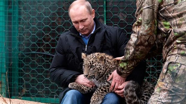Russian President Vladimir Putin pets snow leopard