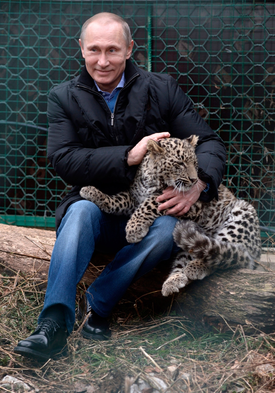 Russian President Vladimir Putin pets a snow leopard cub at the snow leopard sanctuary in the Russian Black Sea resort of Sochi, Tuesday, Feb. 4, 2014. (RIA-Novosti, Alexei Nikolsky, Presidential Press Service)