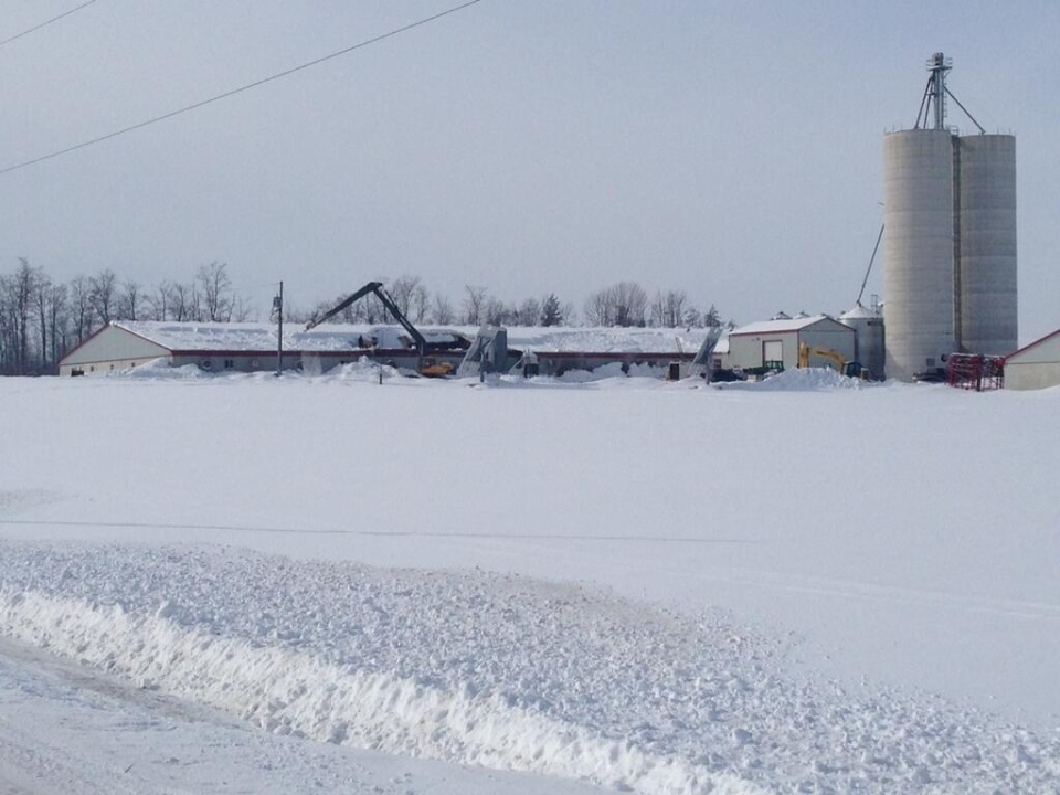 Farmers Urged To Remove Snow From Barn Roofs Ctv News London