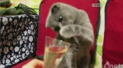Jeff's Video: Do cat's like champagne?