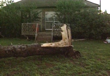 A large tree uprooted by the storm winds lays in front of this Taber, Alta., home on Tuesday, July 15, 2008.