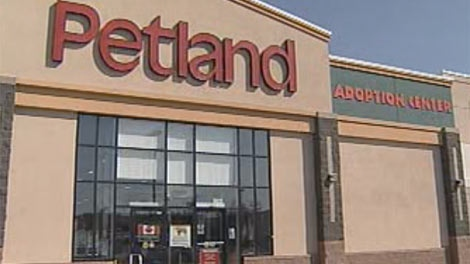 Petland said on Sept. 9, 2011 it will phase out puppy and kitten sales.