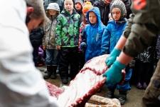Denmark zoo puts down giraffe