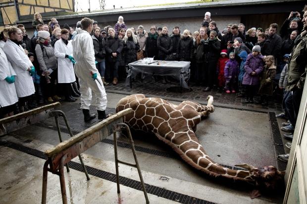 zoo herning sex i København