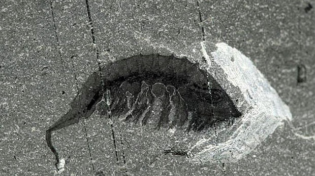 Kootenay National Park, fossil find, Burgess Shale