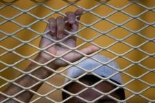 Afghanistan prisoners