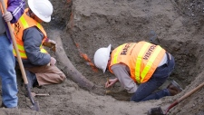 Mammoth tusk discovered in Seattle