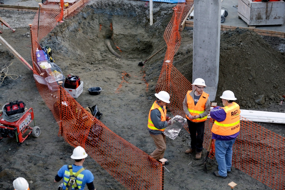 Ancient mammoth tusk recovered from Seattle construction site | CTV News