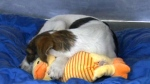 NHL player David Backes  brings stray dogs home fr