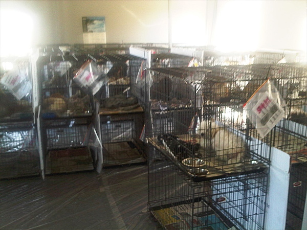 The puppies will be housed in this facility until they are ready for adoption, Sept. 21, 2011.