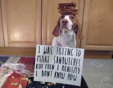 Dog shaming won't work
