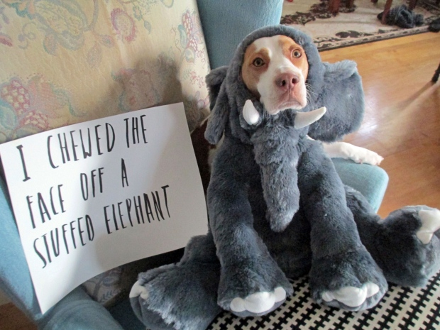 Experts say dog shaming doesn't work