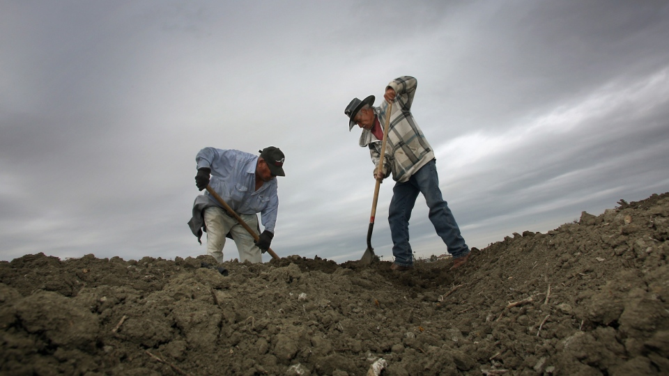 Jose Ortega, left and Fidel Meza work the soil looking for drip lines in a dry tomato field as storms arrive in the area Wednesday, Feb. 26, 2014 in Lemoore, Calif. The first significant California storm in months barreled down from the north Wednesday, promising much-needed rain to the drought-stricken state but also the threat of mudslides and flooding. A potentially stronger storm is expected to move in late Thursday. (AP / Gary Kazanjian)