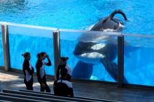 SeaWorld complains abut US investigator
