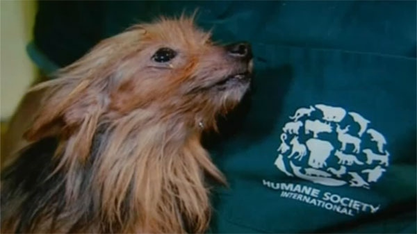 Dogs like these need better protection under Quebec law, animal rights activists say.