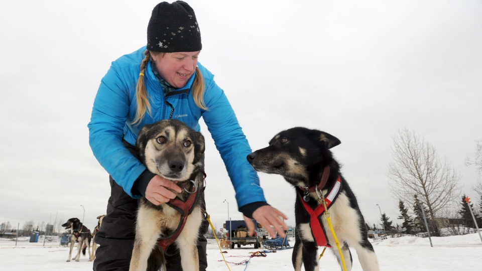 Rookie Iditarod musher Abbie West of Two Rivers, Alaska, prepares Sirius, left, Perseus and the rest of her team for a short run 'just to stretch them out' at Tozier Track in Anchorage, Alaska on Friday, Feb. 28, 2014. (Anchorage Daily News, Erik Hill)