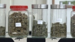 Different strains of medical marijuana sit on the shelf at a dispensary in Vancouver, March 5, 2014.
