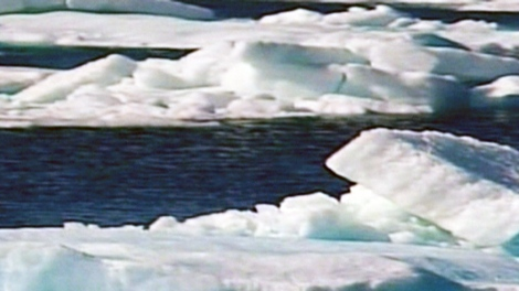 They're among the most prominent and majestic features of Canada's Arctic North - but now they're disappearing at an alarming rate.