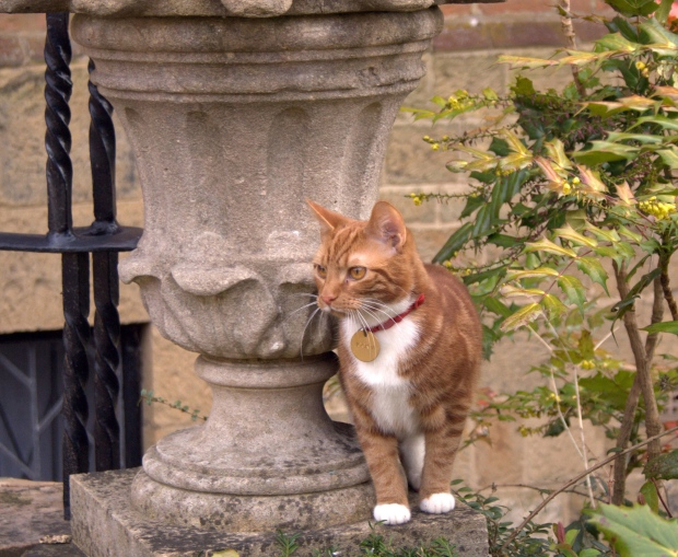 Churchill cat