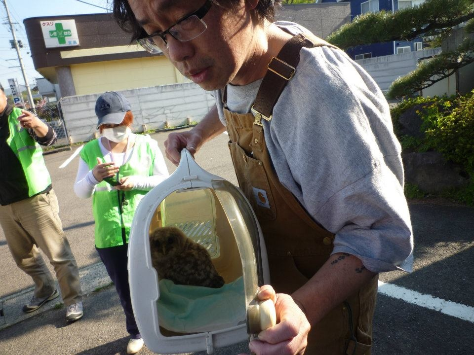 Howard Watanabe-Jin is shown with a rescued animal as it is released back into the wild in Japan. (Provided/Howard Watanabe-Jin)