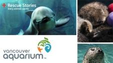 Vancouver Aquarium Rescue Stories